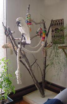 The alaska bird club bird care activity for How to build a bird stand